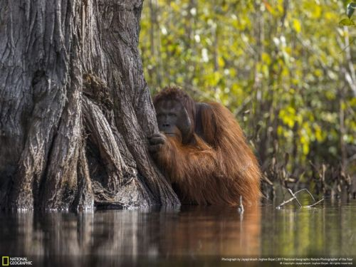 Les lauréats du National Geographic Photographer of the year