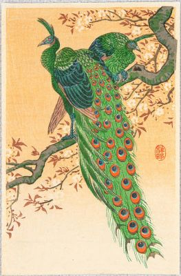 Ohara Koson - Peacock and Peahen on Branch
