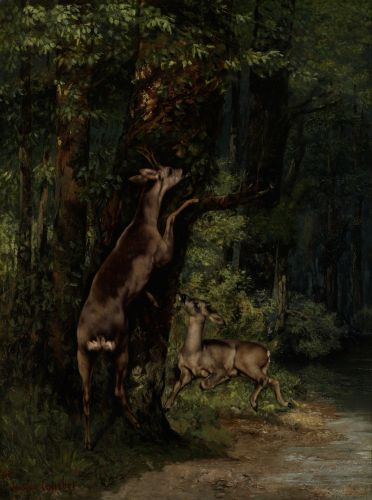Gustave COURBET Deer in the Forest 1868